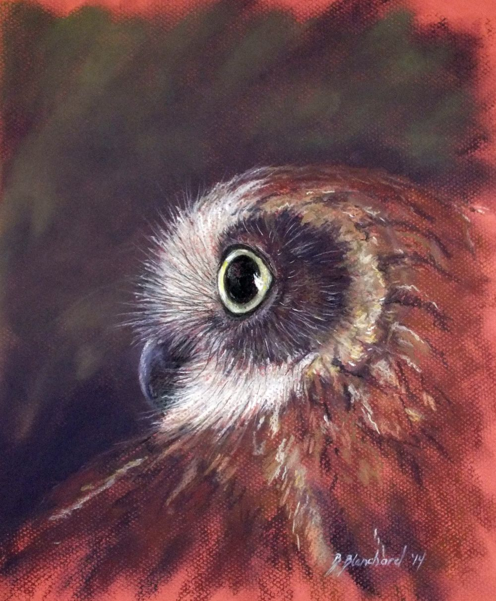 Pastel Painting of a Southern Boobook Owl.