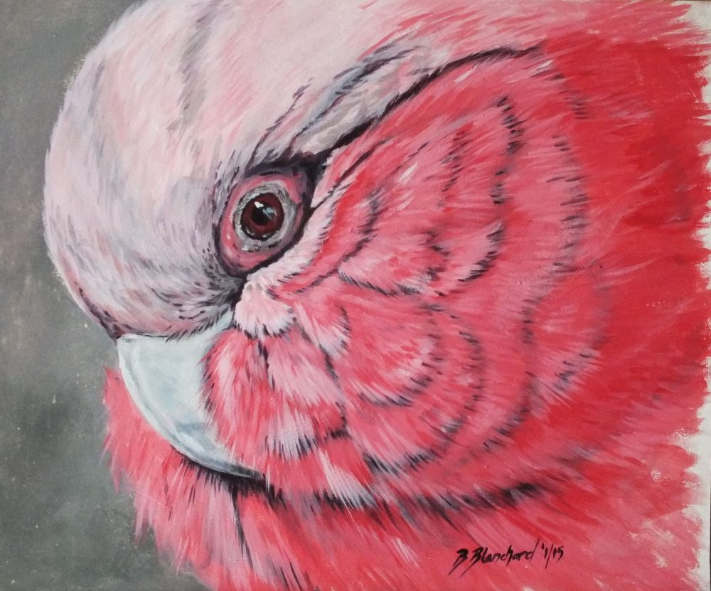 Acrylic Painting of a Galah.