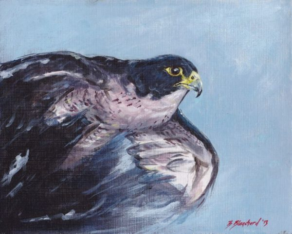 Acrylic painting of a Peregrine Falcon in flight.