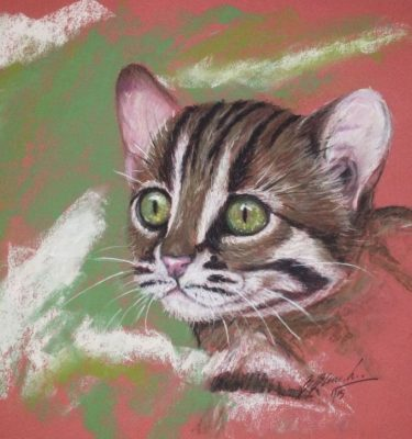 Pastel portrait of a young rusty spotted cat.