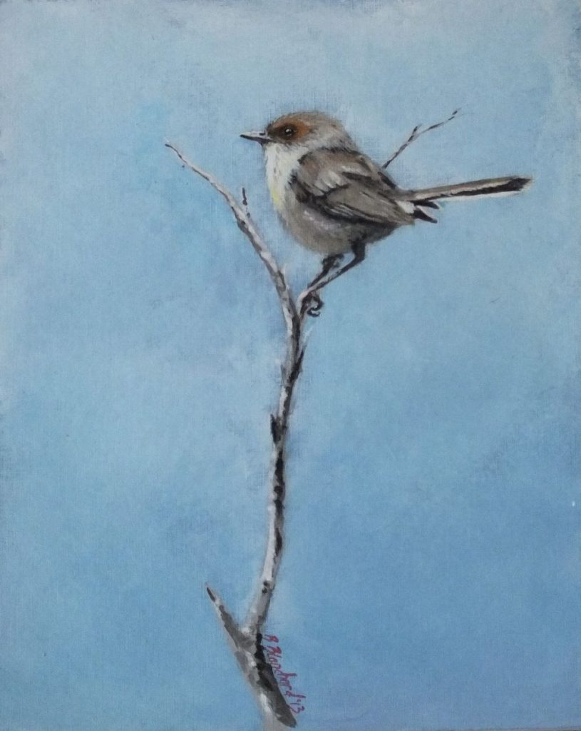 Acrylic painting of a female superb fairy-wren.