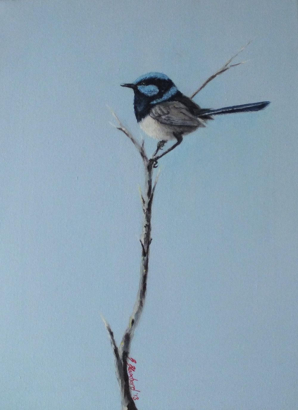 Acrylic painting of a male superb fairy-wren.