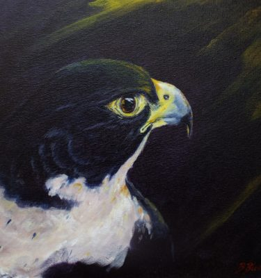 Acrylic painting of a Peregrine Falcon