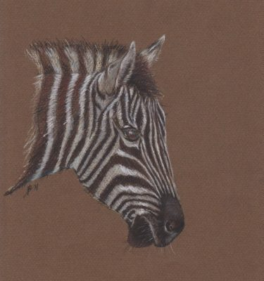 Pastel painting of a zebra