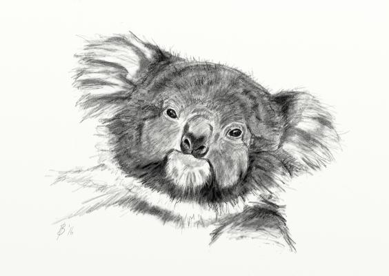Sketch of a koala