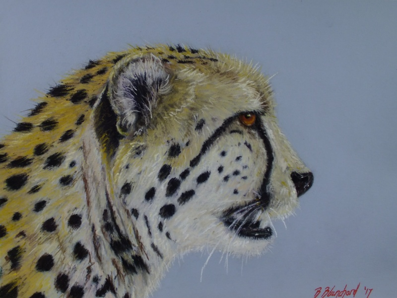 Pastel painting of a cheetah