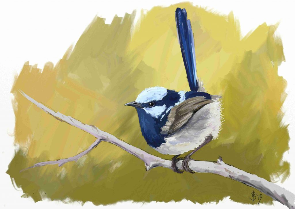 Painting of a Superb Fairy-wren