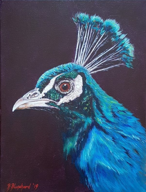 Acrylic painting of a peacock